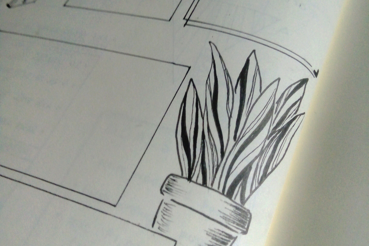 A closeup look of a black and white plant lineart in my bullet journal page